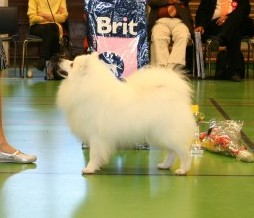 OSLO DOUBLE 2010 NORWEGIAN WINNER 2010 BEST OF BREED - NORWEGIAN WINNER and all the way to the semifinal..... INT N DK FIN S Uch  Jr. EUV-05  EUV-06  NV-07  NV-08  NV-10 Jasam's Very Tasty Grandson d'Akido