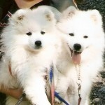 Babe and Vicki aug.2008