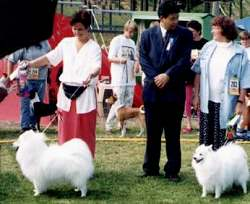 SVENSK VINNER UTSTILLING TIMRÅ 5/8- 95 WINNER SHOW IN SWEDEN 1995 Dommer/judge: Izumi Awaschima, Japan Til venstre/from left to right:   BOB - Akido The White Prince in Nagasa'ki BOS - Ceritan Tsubaki,  Eier/owner: Airi Anttila, Finland