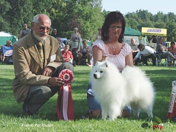 4 x Summer Dogshow Ronneby Year ??? Int Nord  Dk Uch Ww-02 AMSw-02 Nv-02 Nv-04 Euv-05 Kbhv-05 Nv-05 Wwv-08 Jasam`s Interesting Silver Boy BOB and WINNING GROUP 5 - 6 BEST IN SHOW