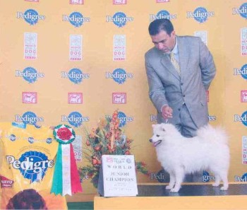 DANISH WINNER 2010 in Herning Desember 2010 N DK Uch Mex ch Lux ch HR ch Jr Ww-07 Mex w-07 Dk v-10 Jasam's Beautiful Silvers Dream Owner: Tone Sømme (Sorry for this old photo from World dogshow 07... it's the only photo i have) BIG CONGRATULATIONS Tone & Tea :-)
