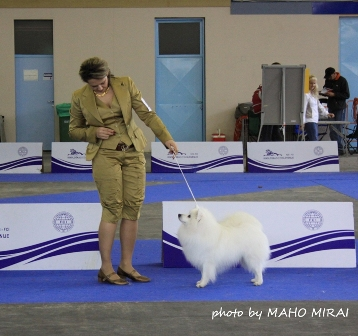 BOB Winner of The Special Show for Japanese Breeds in Celje, Slovenia 2010 MULTI WINNER/ CHAMP Jasam's Golden Son of Silverboy & also FINNISH WINNER 2010  in Helsinki - Desember 2010 father: Int Nord  Dk Uch Ww-02 AMSw-02 Nv-02 Nv-04 Euv-05 Kbhv-05 Nv-05 Wwv-08 Jasam`s Interesting Silver Boy - mother: Jr Euv-05 Noidens Wilma the Winner for Jasams) Owner: Elena Bulygina - Russia All Zlatik's titles : World Junior Winner 2008, European Junior Winner 2008, Junior Champion of the Russian Spitz Club,Russian Junior Champion, Latvian Junior Champion, Hungarian Junior Champion, Russian Champion, Champion of the Russian Spitz Club, Russian Grand Champion, Eurasia Champion,RKF Champion, Lithuanian Champion, Romanian Champion, Romanian Grand Champion,Macedonian Champion, Champion of Montenegro, Bulgarian Champion, Balkan Champion, Serbian Champion, BIG CONGRATULATIONS !!!